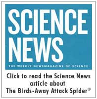 Science News article on the Birds-Away Attack Spider